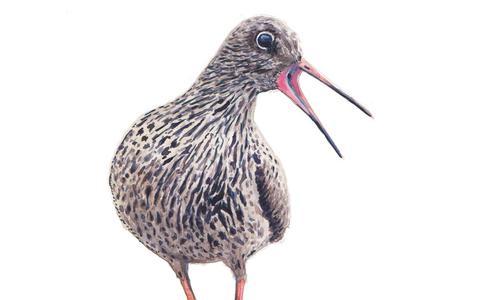 Eilandmeisje laat 25 waddenvogels vliegen