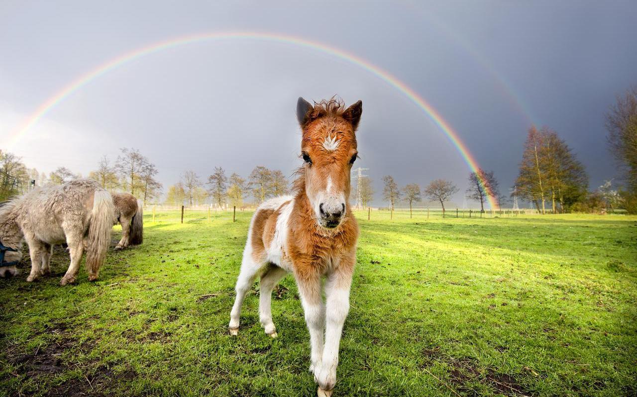 Festival Welcome to The Village serveert dit jaar het vlees van drie pony's. FOTO MARCEL VAN KAMMEN