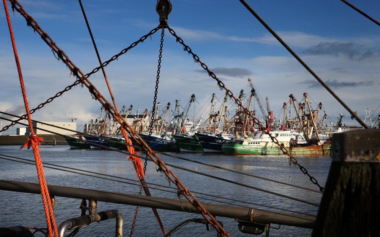 De Harlinger Visserijhaven.