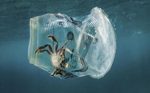 Wetenschap slaat alarm: miljoen soorten met uitsterven bedreigd