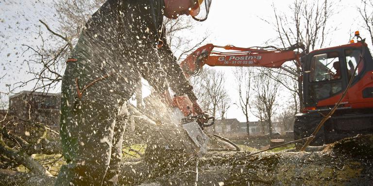 Bomenkap in verband met essentaksterfte aan de Dongeradyk in Dokkum. Ook in de gemeente Opsterland zullen veel essen geveld moeten worden. FOTO MARCEL VAN KAMMEN