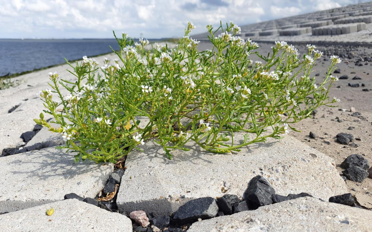 Zeeraket op het nieuwe stuk Afsluitdijk