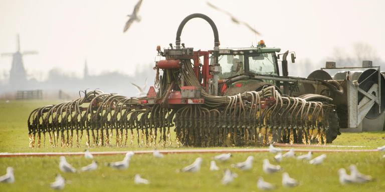 Meeuwen volgen deze boer die met zijn tractor en sleepslang mest aan het uitrijden is in een weiland net buiten Raard. FOTO: MARCEL VAN KAMMEN