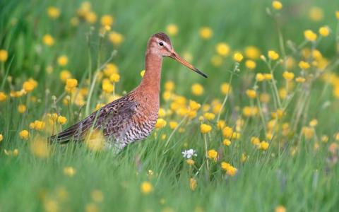 Opinie: Politiek schiet tekort in beleid biodiversiteit