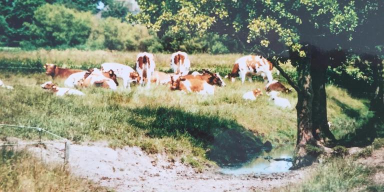 Beeld uit de jaren '90 van het coulissenlandschap in de omgeving van Bitgummole. FOTO SIKKE LAUTENBACH