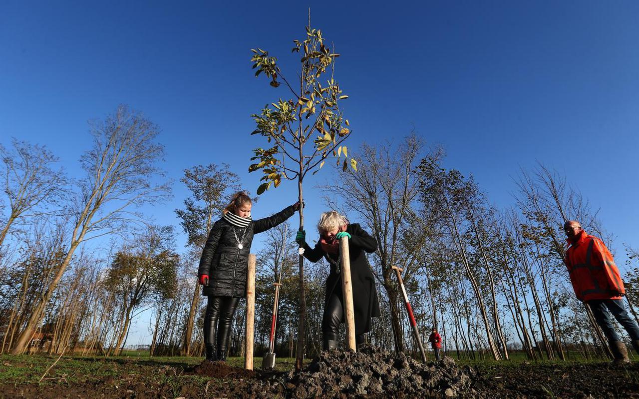 Burgemeester Marga Waanders van Waadhoeke en kinderburgemeester Hester Britt Sijtsma planten een walnootboom in het voedselbos van Menaam.
