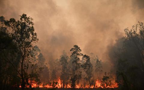 Nieuwe schors voor verbrande bomen in Australië