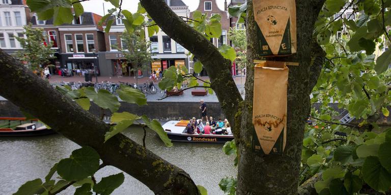 Ook in bomen aan de Leeuwarder Nieuwestad hangen zakjes met lieveheersbeestjes. FOTO HOGE NOORDEN/JAAP SCHAAF