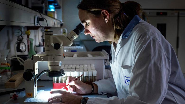 Jenke Gorter doet onderzoek naar Noordzeeziekte. Ze test op fruitvliegjes welke stofjes als medicijn zouden kunnen werken. UMCG, Universitair Medisch Centrum Groningen. FOTO CORNE SPARIDAENS