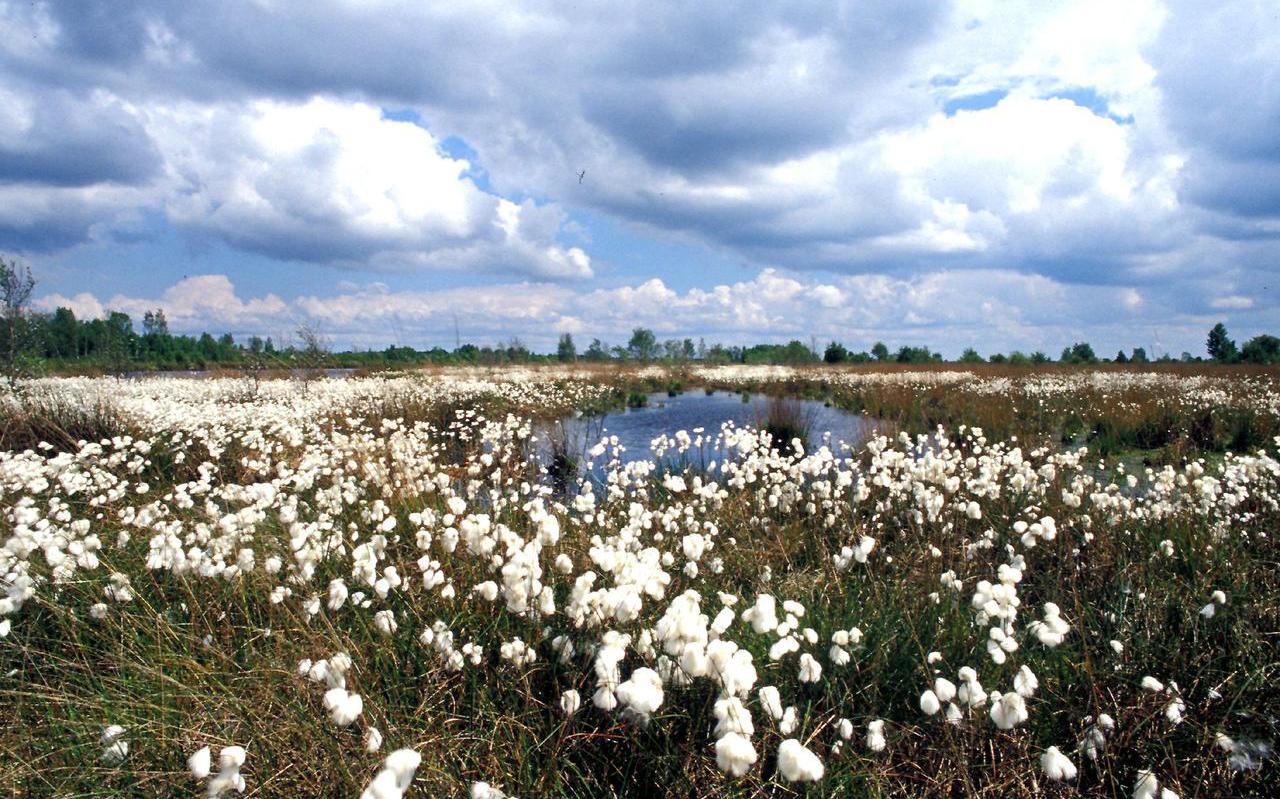 Natuurpark Moor-Veenland. Grote delen van Noord-Nederland zagen er voor 1800 zo uit.