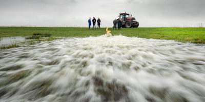 Bij Lekkum is woensdag met een trekkerpomp het plasdrasland van Folkert Visser en de maatschap Van Houten boeren onder water gezet. FOTO MARCEL VAN KAMMEN
