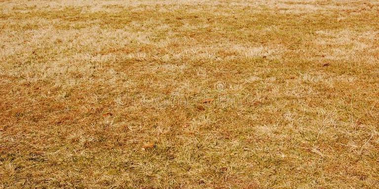 Verdord gras in Burgum. FOTO FACEBOOK