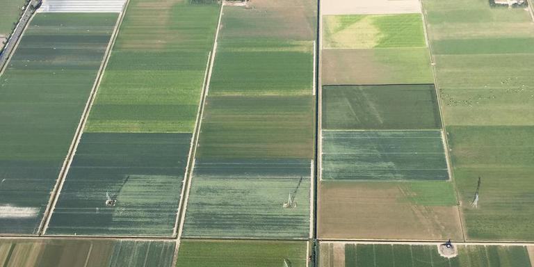 De (weggehaalde) dijk die bij Blokzijl de Zuiderzee inliep naar een lichtwachtershuis (begint rechtsonder op de foto en loopt dan diagonaal links omhoog) is door de droogte weer zichtbaar in het landschap. FOTO ZWEEFVLIEGCLUB NOORDOOSTPOLDER