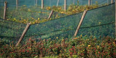 Teler Jan Visbeek mag geen groene schermen meer plaatsen. FOTO NIELS DE VRIES