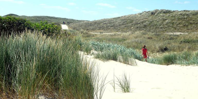 Stuivend zand aan het begin van de Boschplaat bij paal 20 zorgt voor nieuwe natuur. FOTO JAN HEUFF