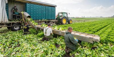 Arbeidsmigranten aan het werk op het land. FOTO SHUTTERSTOCK