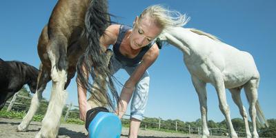 Hester Bouwman doet een hoefzak om bij een van de zieke paarden.