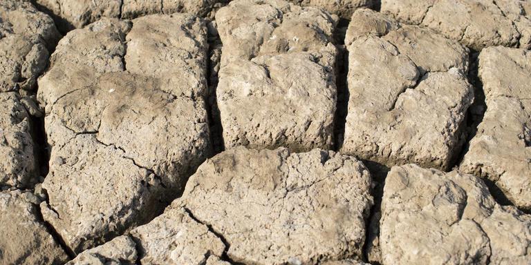 De bodem van de oever van de Rijn is gescheurd door de droogte.
