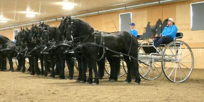 De Canadese Quadrillegroep traint in de binnenbak van boerin Annie Muilwijk voor hun show tijdens het 35-jarig jubileum van de Friesian Horse Association North America. FOTO ANNIE MUILWIJK