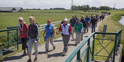 De massale deelname aan de Slachtemarathon bewijst dat Friesland populair is bij wandelaars. FOTO ARCIEF LC