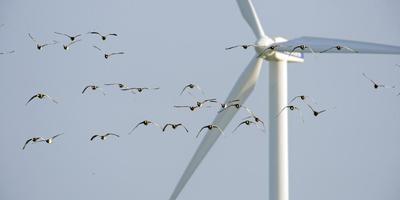 Hoe om te gaan met windenergie wordt wellicht een van de bespreekpunten tijdens de coalitievorming. FOTO archief lc/MARCEL VAN KAMMEN