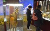 Vechten voor behoud natuurmuseum op Terschelling