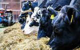 Hoeveel antibiotica krijgen onze koeien en varkens?