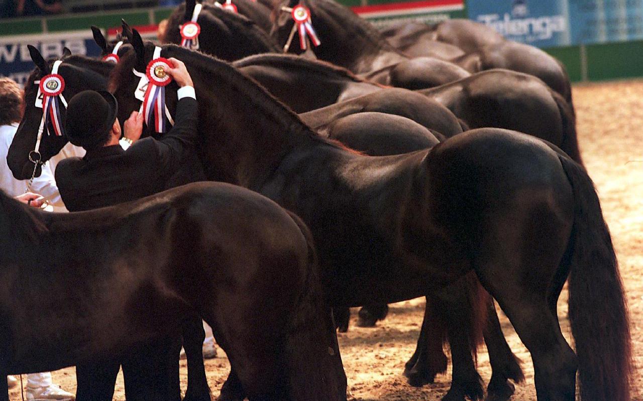 Bij het Friesch Paarden-Stamboek is onder meer onenigheid over keuringen door de hengstenjury.