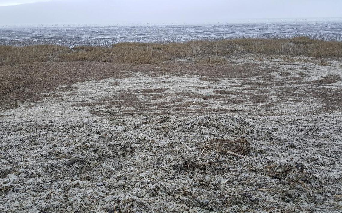 Zeedijk bij Koehoal bezaaid met plastic - Friesland - LC.nl