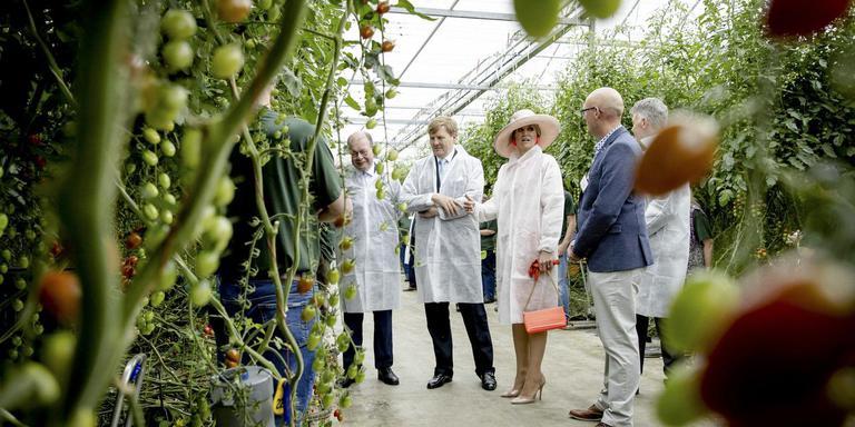 Tomatenkwekerij in Wier.