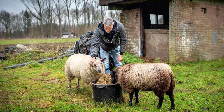 Pachter Johan van der Ploeg verzorgt schapen op het terrein van het oude woonwagenkamp in Drachtstercompagnie. ,,Volgens mij willen ze dat ik met stille trom vertrek. Dat ga ik niet doen.'' FOTO JILMER POSTMA