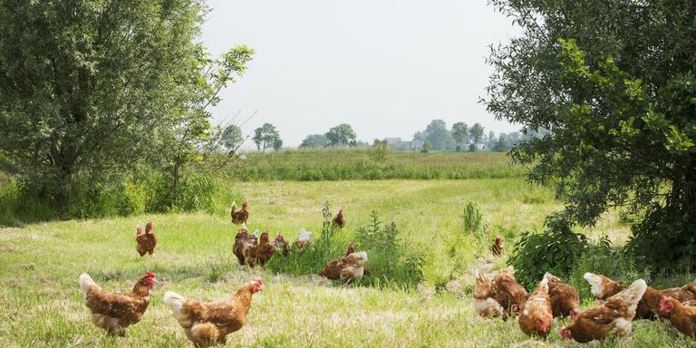 Rimer Dijkstra uit Hiaure wil een biologische kippenboerderij in Aalsum beginnen, maar dat willen dorpelingen niet. FOTO MARCEL VAN KAMMEN