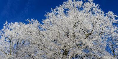 Zondag kans op sneeuw in noordoosten