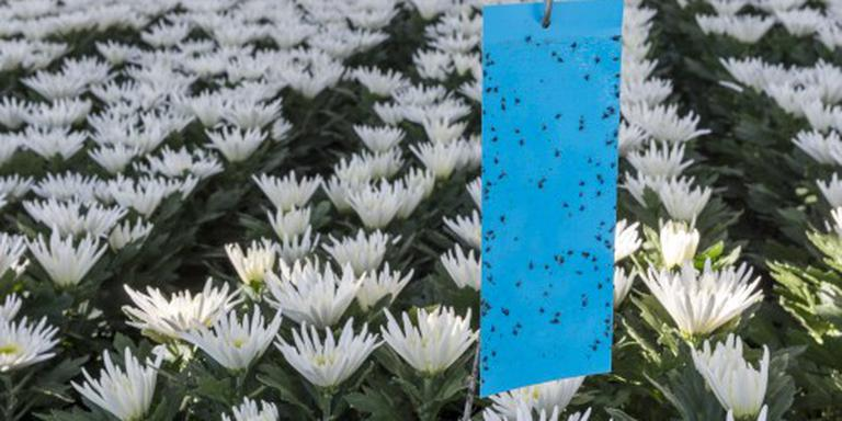Bloemenexporteurs willen snel duidelijkheid