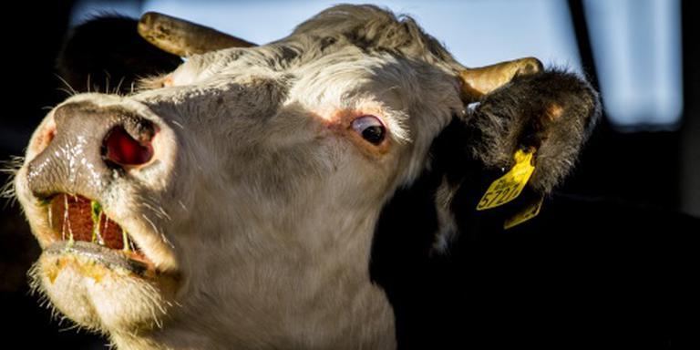 Runderen weggehaald bij veehouder