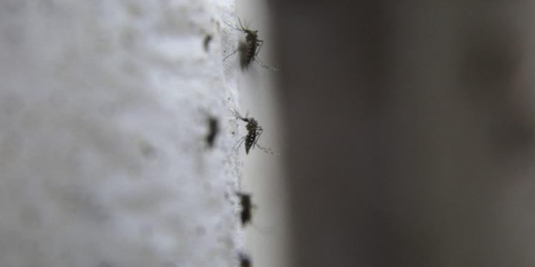 'Insmeren met antimuggenspul is enige optie'