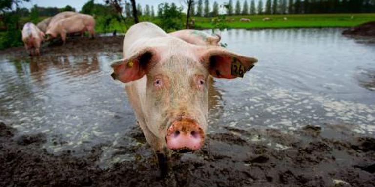 CBS: biologische landbouw neemt toe
