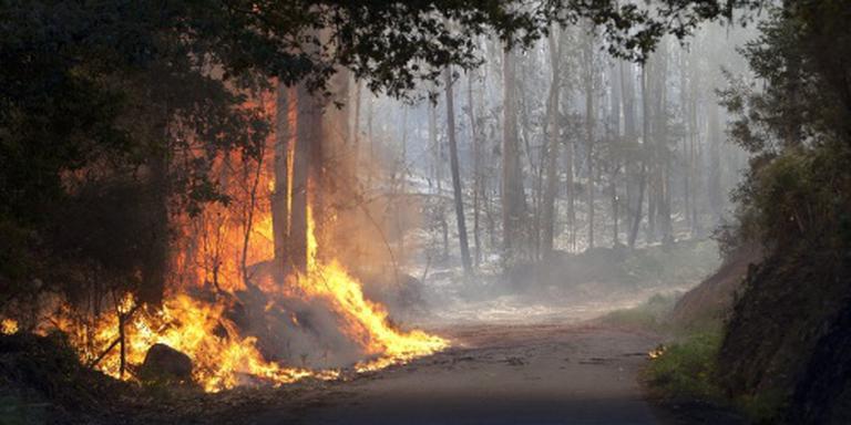 Europese hulp tegen Portugese bosbranden