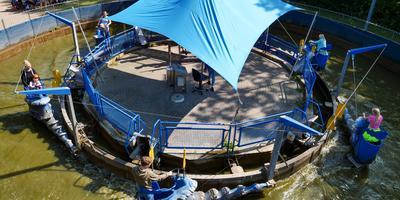 Vierhonderd bezoekers kreeg Sybrandy's speelpark op de laatste dag. FOTO LC/ARODI BUITENWERF