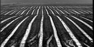 Boeren zitten vast aan beschermde Bildtdijken