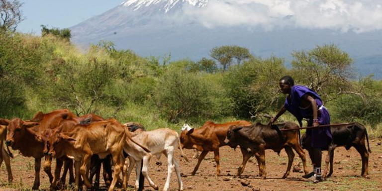 Doden na gevechten om diefstal vee in Kenia