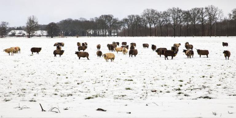 'Temperatuurwisseling ongunstig voor natuur'