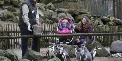 'Aqua Zoo failliet? Zonde van zo'n mooi park'