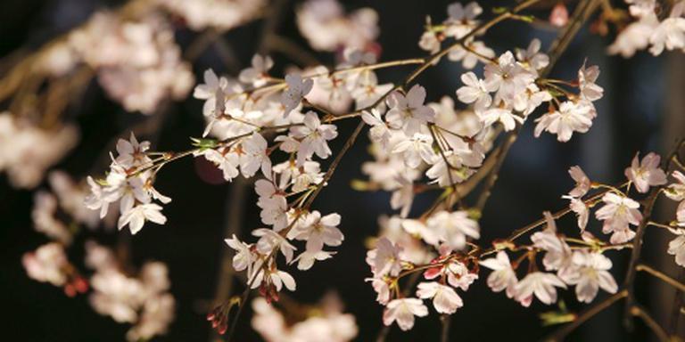 Natuurdocu Japan scoort 1,5 miljoen kijkers