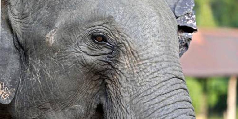 Olifant doodt achtjarige in Oeganda