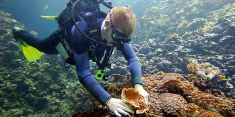 Stijging zeespiegel te snel voor koraalriffen