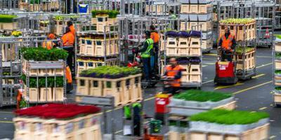 Italiaanse zorgen drukken bloemenexport