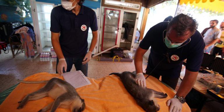 Verwaarloosde dieren gered uit zoo in Gaza