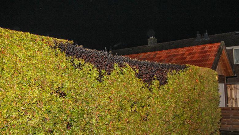 Coniferen in brand aan Fabriekslaan in Drachten.