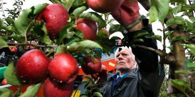 Telers optimistisch over appel- en perenoogst
